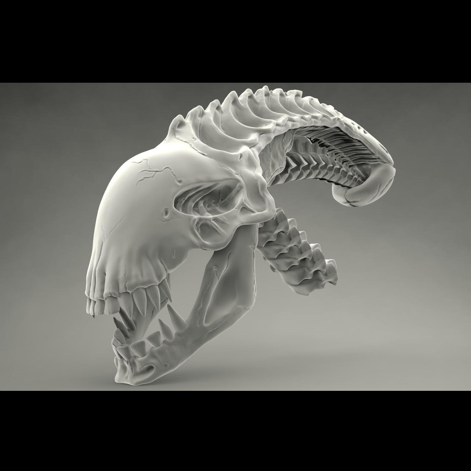 异形头骨 Alien Skull