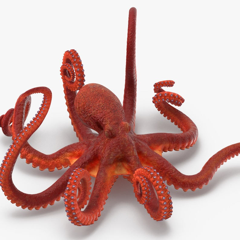 章鱼 八爪鱼 Octopus-3D打印